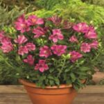 Things to consider while buying plants online